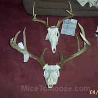 Antler Mounts